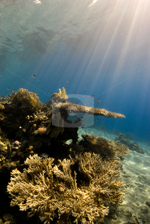 A natural light shot of a Coral Reef stock photo, A natural light shot of a Coral Reef in the early morning light with Sun Rays. Red Sea, Eygpt. by Mark Doherty