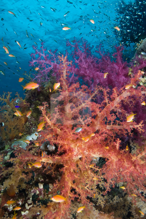 Colorful tropical reef scene stock photo, Colorful tropical reef scene, Red Sea, Egypt by Mark Doherty