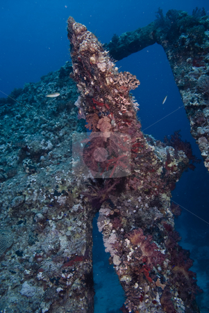 Coral encrusted propeller of a shipwreck. Red Sea stock photo, Coral encrusted propeller of a shipwreck. Red Sea, Egypt by Mark Doherty