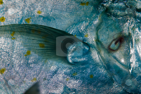 A Close up side view of a Yellow-dotted trevally (Carangoides fu stock photo, A Close up side view of a Yellow-dotted trevally (Carangoides fulvoguttatus). Red Sea Egypt. by Mark Doherty