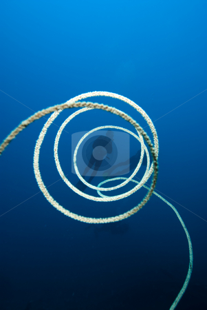 The spiralling whip cora stock photo, The spiralling whip coral. Red Sea, Egypt. by Mark Doherty
