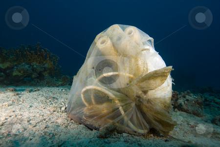 Garbage bag dumped underwater stock photo, Garbage bag dumped underwater. Red Sea, Egypt by Mark Doherty