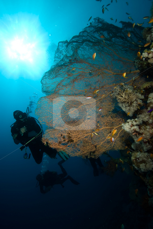 Giant sea fan (Annella mollis) with two divers silhouetted in th stock photo, Giant sea fan (Annella mollis) with two divers silhouetted in the background, low angle view. Red Sea, Egypt. by Mark Doherty