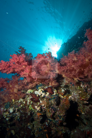 Colourful soft corals with sunbeams stock photo, Colourful soft corals with sunbeams. Red Sea Egypt by Mark Doherty