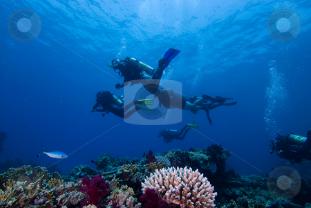 Divers above a colorful tropical reef stock photo, Divers above a colorful tropical reef by Mark Doherty