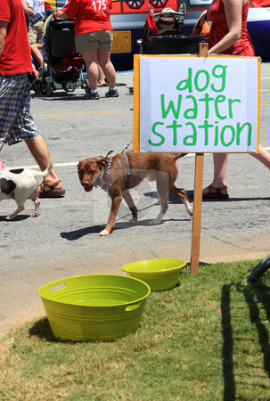 Fourth of july festival stock photo, Dog water station by Jack Schiffer