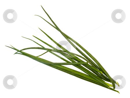 Onion  stock photo, Isolated green bunch-onion at the white background by Sergej Razvodovskij