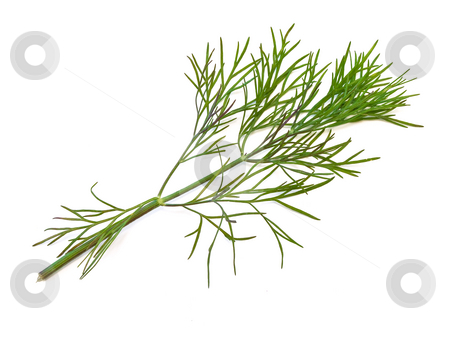 Dill  stock photo, The photo of the green dill at the white background by Sergej Razvodovskij