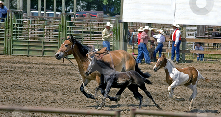 Adult Horse and Two Babies Running stock photo, This photo shows a mom and 2 baby horses running around an arena of a rodeo. by Valerie Garner