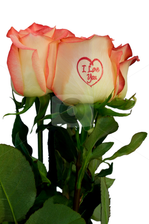 Roses  stock photo, Roses pink with inscription,isolated on white background. by Vladyslav Danilin