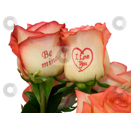 Pink roses with inscription stock photo, Pink roses with inscription ,close-up .Isolated On  white background. by Vladyslav Danilin