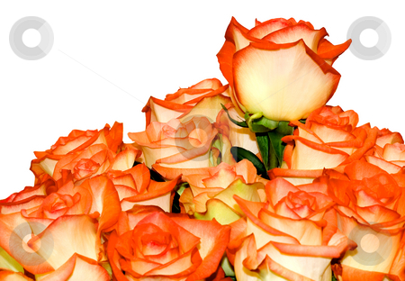 Roses Bouquet stock photo, Roses Bouquet,isolated on white background. by Vladyslav Danilin