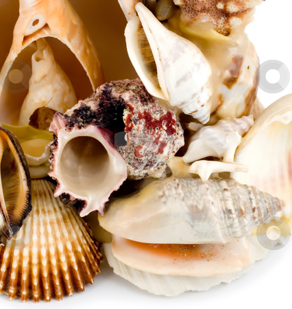 Seashell stock photo, Seashell collection , close-up isolated on white background by Vladyslav Danilin