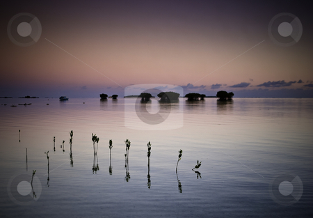 Black Pearl stock photo, Sunrise on the Pacific Island of Tonga Tapu. In the background the roar of the Pacific hammering the reef. Even that cant disturb the tranquility of the moment and the stillness of the water over the young emerging mangrove shoots. by Robin Ducker