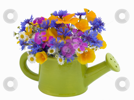 Bunch of flowers in the  watering pot stock photo, Bunch of flowers in the  watering pot isolated on white background by Valery Kraynov