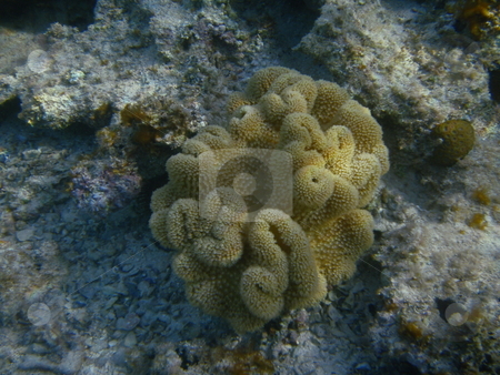 Corals  stock photo, Korallenstock im roten Meer bei Hurghada / Corals in the Red Sea by Hurghada by Thomas K?