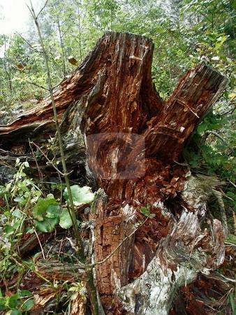 Stump  stock photo, Vermorschter Baumstumpf in Mischwald auf Rax / Rotten stump in mixed forest on Rax by Thomas K?