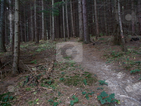 Coniferous forest  stock photo, Nadelwald im Hollental - Rax, Nieder???sterreich / Coniferous forest in Hollental - Rax, Lower Austria by Thomas K?