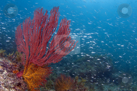 Sea of Cortez stock photo,  by Greg Amptman