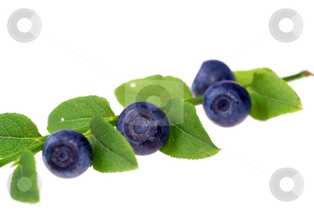Berry stock photo, Branch berry and leaf on white background by Jolanta Dabrowska