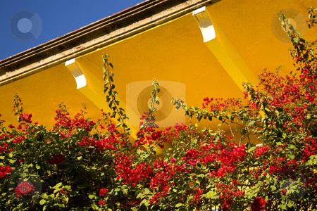 Red Bouganvillia Yellow Adobe Roof Mexico stock photo, Colors of Mexico Red Bouganvillia, Yellow Adobe Roof, Blue Sky Guadalajara by William Perry