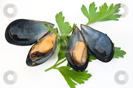 Two Mussels With Lemon And Parsley stock photo, Two boiled mussels with lemon and parsley isolated on white background by ANTONIO SCARPI