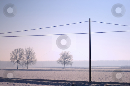 Snowscape stock photo, Landscape of snow, trees and a light pole by Fabio Alcini