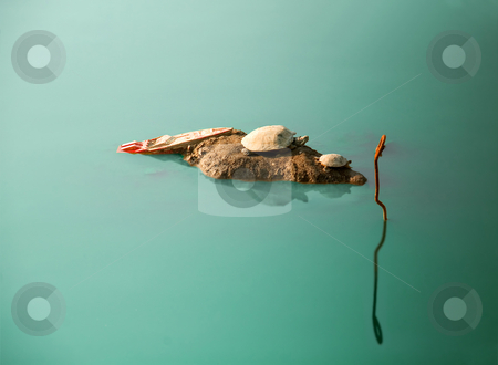 Shipwrecked turtles stock photo, A couple of shipwrecked turtles on a iland ,on the middle of nowhere by Francesco Perre