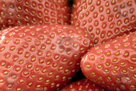 Ripe strawberries stock photo, Close up on five ripe red strawberries by Stephen Gibson