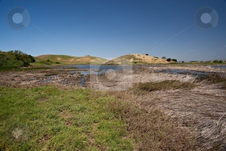 Coyote Hills stock photo, Coyote Hills Regional Park is a regional park administered by the East Bay Regional Park District. The park is located in Fremont, California, on the southeast shore of the San Francisco Bay. by Mariusz Jurgielewicz