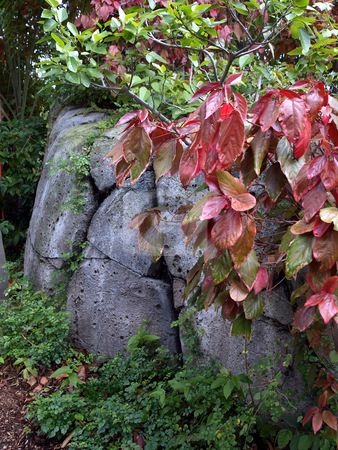 Colorful leaves amid the boulders stock photo, Foliage and colorful leaves amid bouder outcropping by Jill Reid