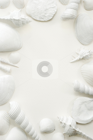White Seashell Frame Background stock photo, White seashells presented on a white sheet of watercolor textured paper offering a framing format with space for a text by Stefan Breton