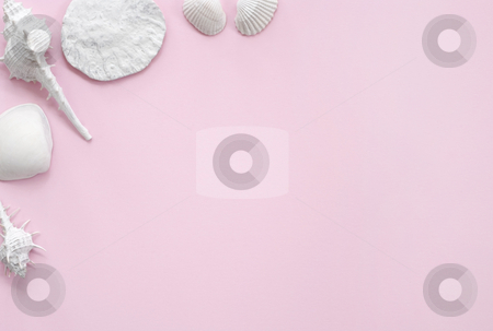 White and Pink Seashell Background stock photo, White seashells presented on a pink sheet of paper offering a framing format by Stefan Breton