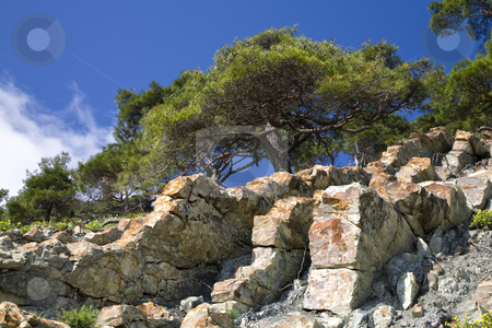 Pine tree on the stone stock photo, Pine tree growing on the stone slope by Valery Kraynov