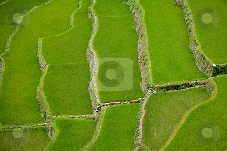 Banaue Rice Terraces , Philippines stock photo, The Banaue Rice Terraces are 2000-year old terraces that were carved into the mountains of Ifugao in the Philippines by ancestors of the Batad indigenous people. by Wouter Roesems