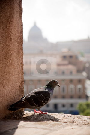 Pigeon resting with Vatican in the background. Rome, Italy stock photo, Pigeon resting on a window of the Sant Angelo castel, with Vatican in the background. Rome, Italy by Wouter Roesems