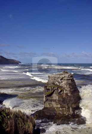 Wild West stock photo, From the Gannet colony in the mid-foreground to as far as the eye can see, the Tasman Sea pounds the west coast of New Zealand's West Coast by Robin Ducker