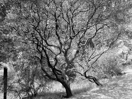 Tree stock photo, Black and white image of tree by Jaime Pharr