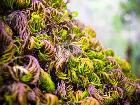 Moss stock photo, Tree trunk moss by Jaime Pharr