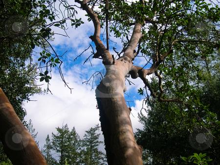 Tree stock photo, Tree with sky background by Jaime Pharr