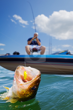 Sport fishing stock photo, Fisherman in a boat catching a walleye by Steve Mcsweeny