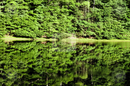Green tree reflection stock photo, A green, lush forest reflected in a calm lake. by Kristen Wood
