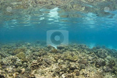 Philippines Reefscape stock photo, Background image of a shallow coral reef in the philippines; with the ocean floor reflecting off the water's surface. by A Cotton Photo