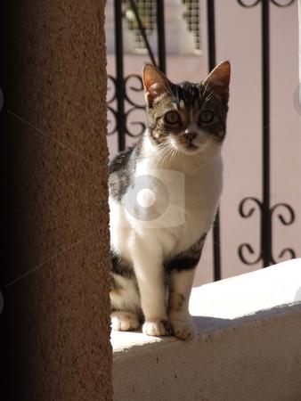 Nosy Cat stock photo, Nosy Cat Lookign into Doorway by Stephen Lambourne