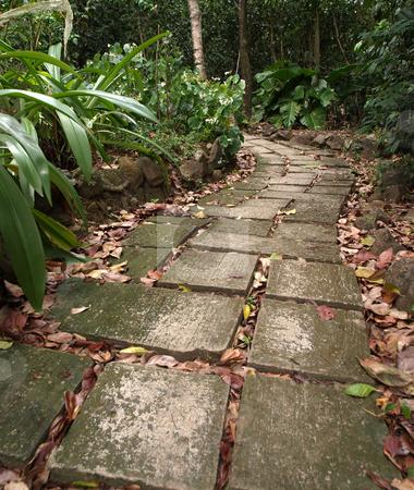 Stone trail through lush foliage stock photo, A beckoning stone trail through lush foliage by Jill Reid