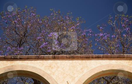 Purple Flowers White Adobe Wall Queretaro Mexico stock photo, Purple Flowers with White Adobe Wall with Arches Queretaro Mexico by William Perry