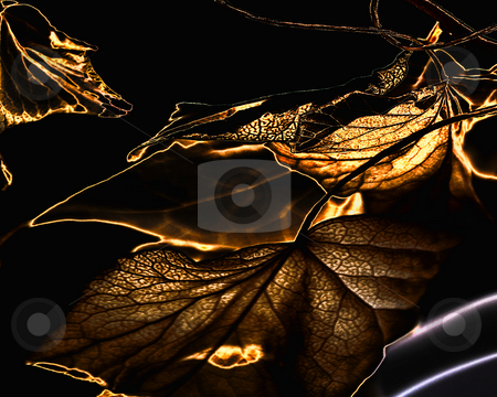 Leaves stock photo, Leaves digitally manipulated. by W. Paul Thomas