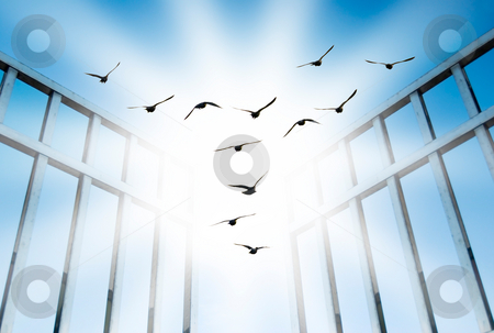 Fly overcome the difficult gate stock photo, Fly for freedom, overcome the difficult gate by Lawren