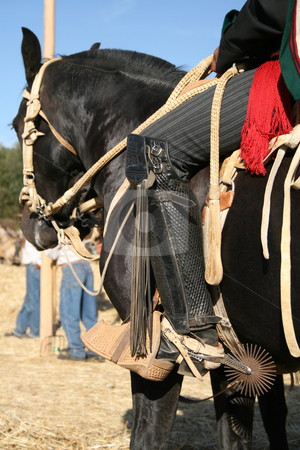 Chilean Guaso stock photo, Chilean farmer on his horse with spurs during the threshing by Philip Muller