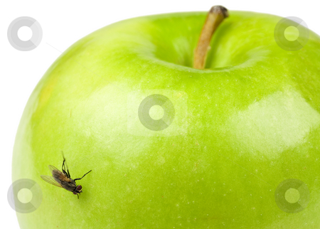 Apple and Fly stock photo, A green apple with a fly on it by Patrick Noonan